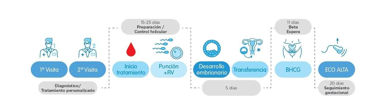 Infografía FIV