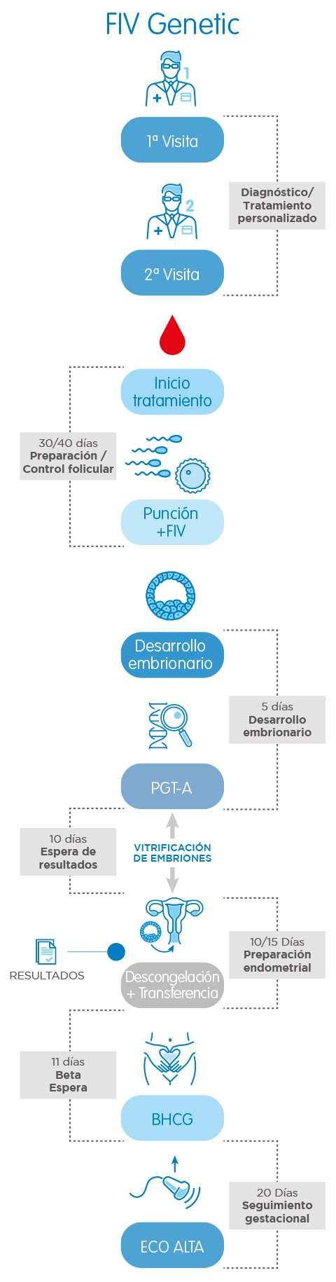 Infografía FIV Genetic (FIV + PGT-A)
