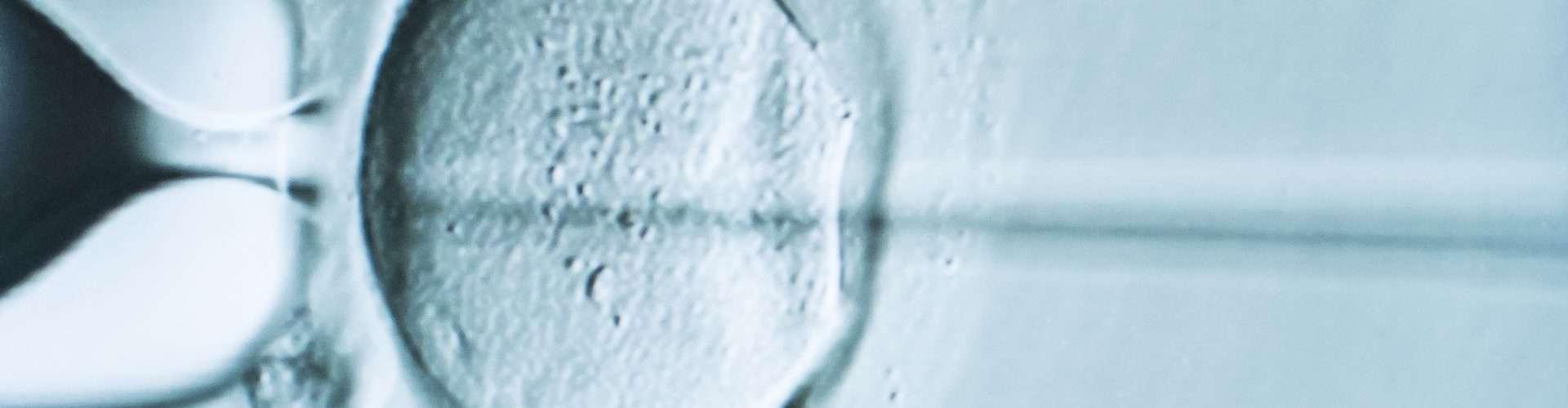 inyección ICSI en el óvulo