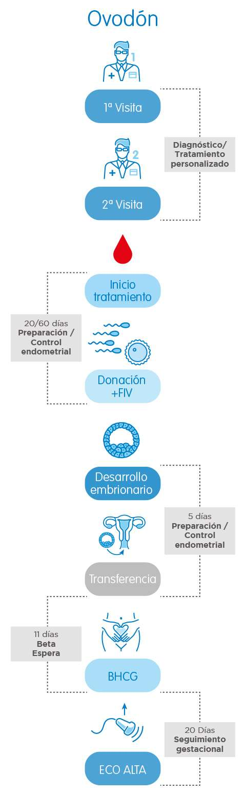 Infografía Ovodonación