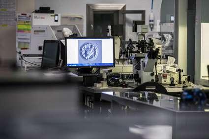 El impacto del oxígeno en el desarrollo del embrión