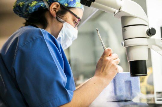 IVI presenta 74 trabajos con importantes hallazgos en seguridad para el éxito de la Reproducción Asistida